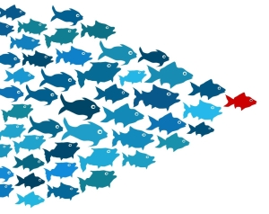 Fishes in group leadership